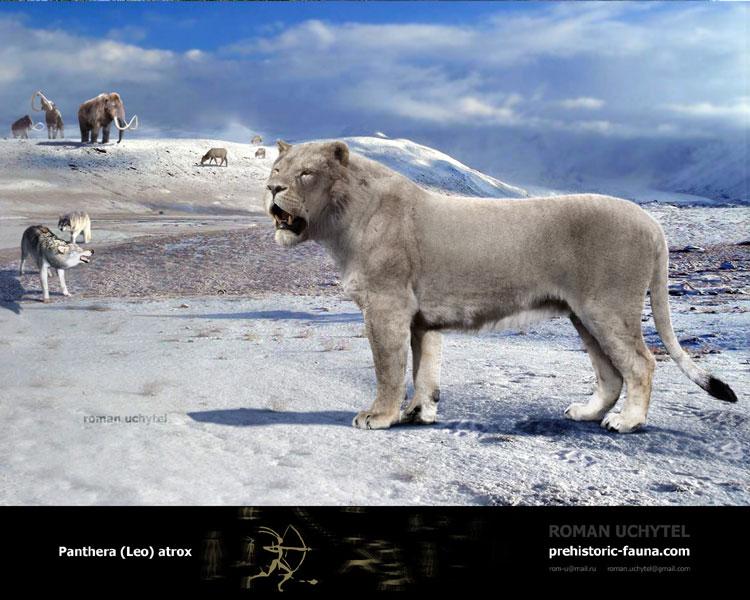 Siberian Tiger vs Gray Wolf Fight Comparison  Compare Animal