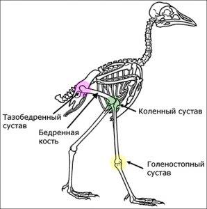 Птицы не могли произойти от динозавров?